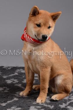 M&N Photography -DSC_2578