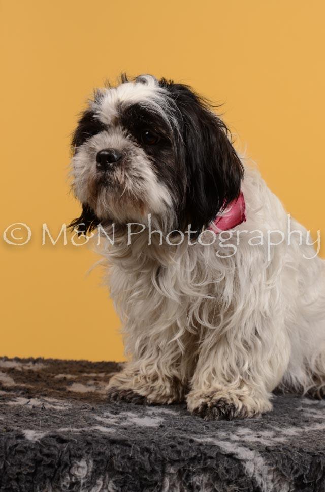 M&N Photography -DSC_4695