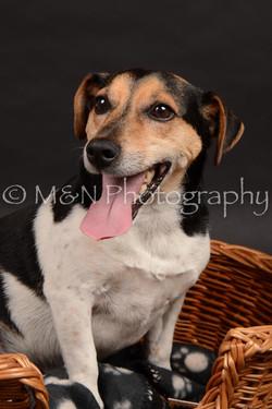 M&N Photography -DSC_0053