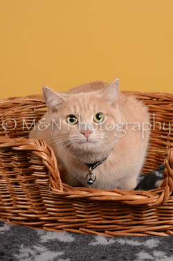 M&N Photography -DSC_4802