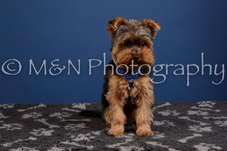 M&N Photography -DSC_5229