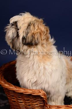 M&N Photography -IMG_4647