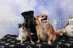 M&N Photography -DSC_6630