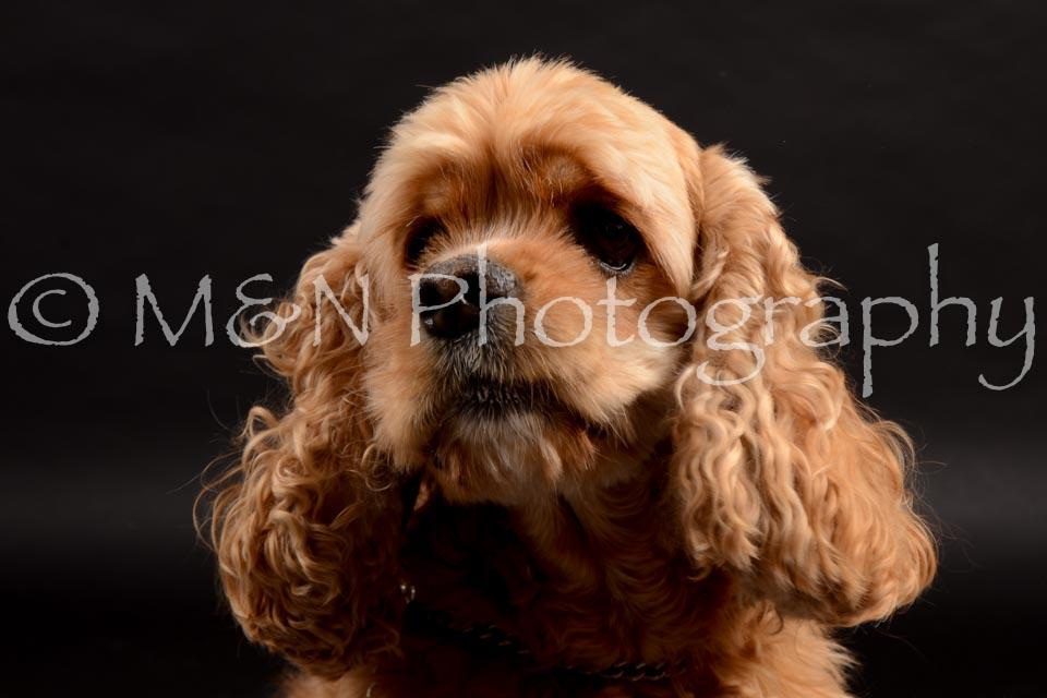 M&N Photography -DSC_9847