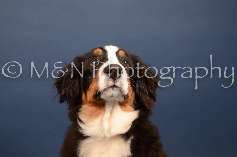M&N Photography -DSC_4090