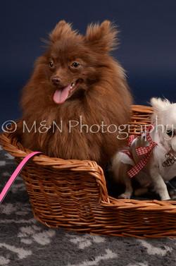 M&N Photography -DSC_0444