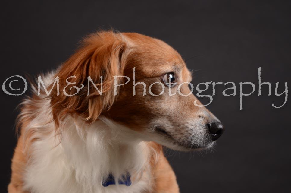 M&N Photography -DSC_5448
