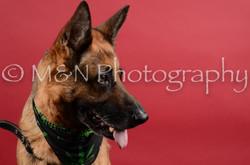 M&N Photography -DSC_8585