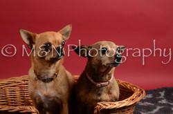 M&N Photography -DSC_8674