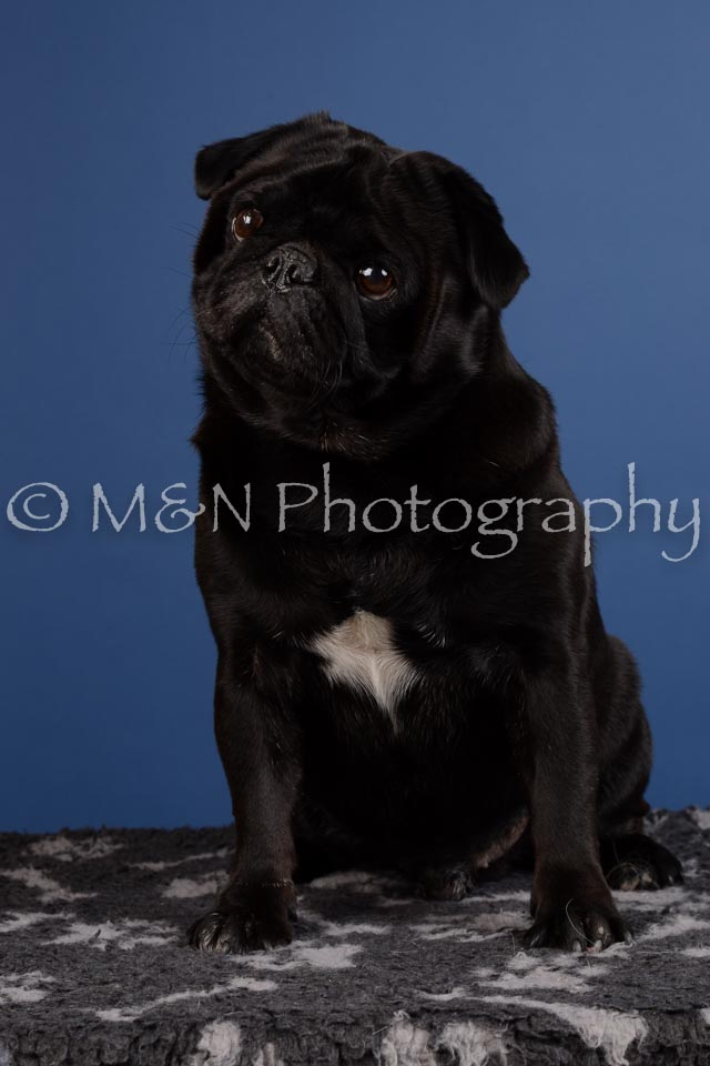M&N Photography -DSC_5076