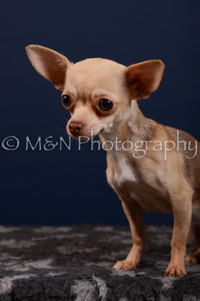 M&N Photography -DSC_4196
