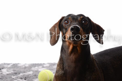 M&N Photography -DSC_8921