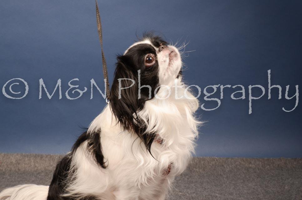 M&N Photography -DSC_4067