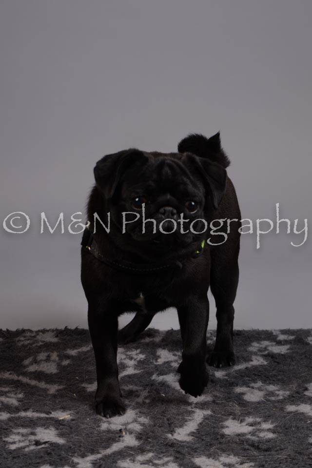 M&N Photography -DSC_2540
