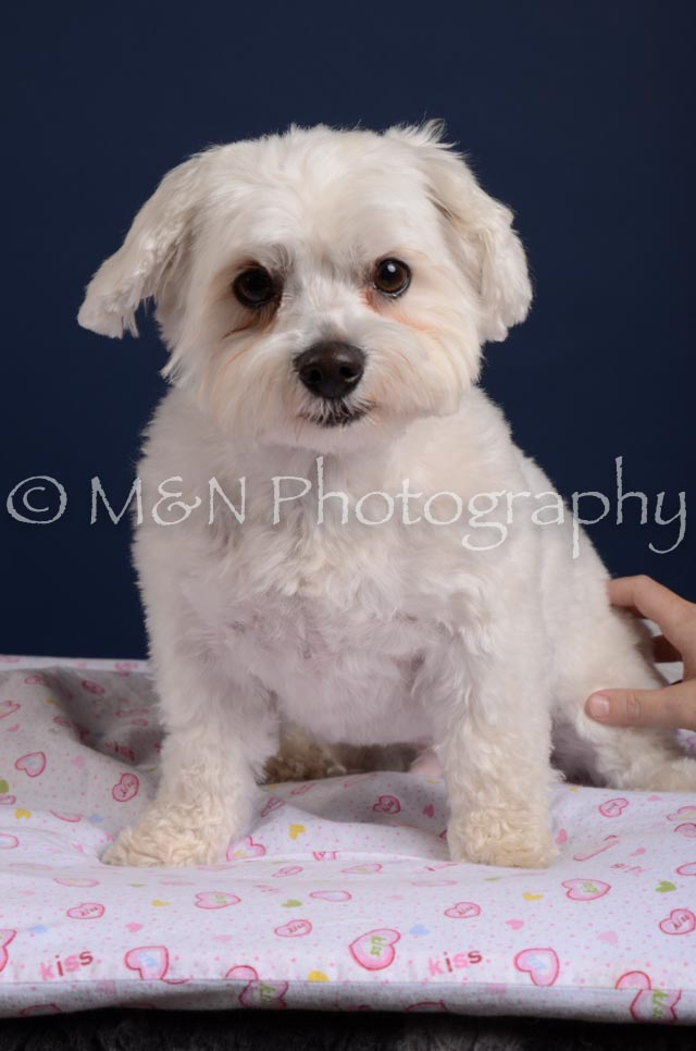 M&N Photography -DSC_4192