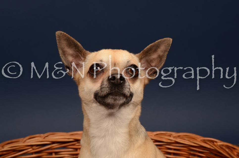 M&N Photography -DSC_4562