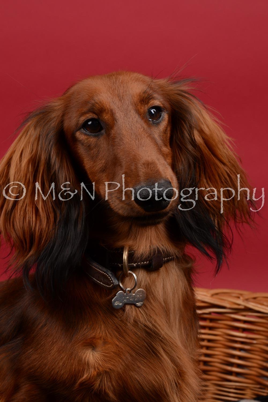 M&N Photography -DSC_8535