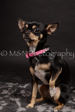 M&N Photography -DSC_0123