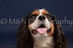 M&N Photography -DSC_0745