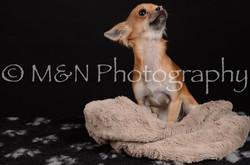 M&N Photography -DSC_5764