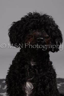 M&N Photography -DSC_2644