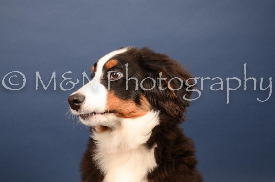 M&N Photography -DSC_4089