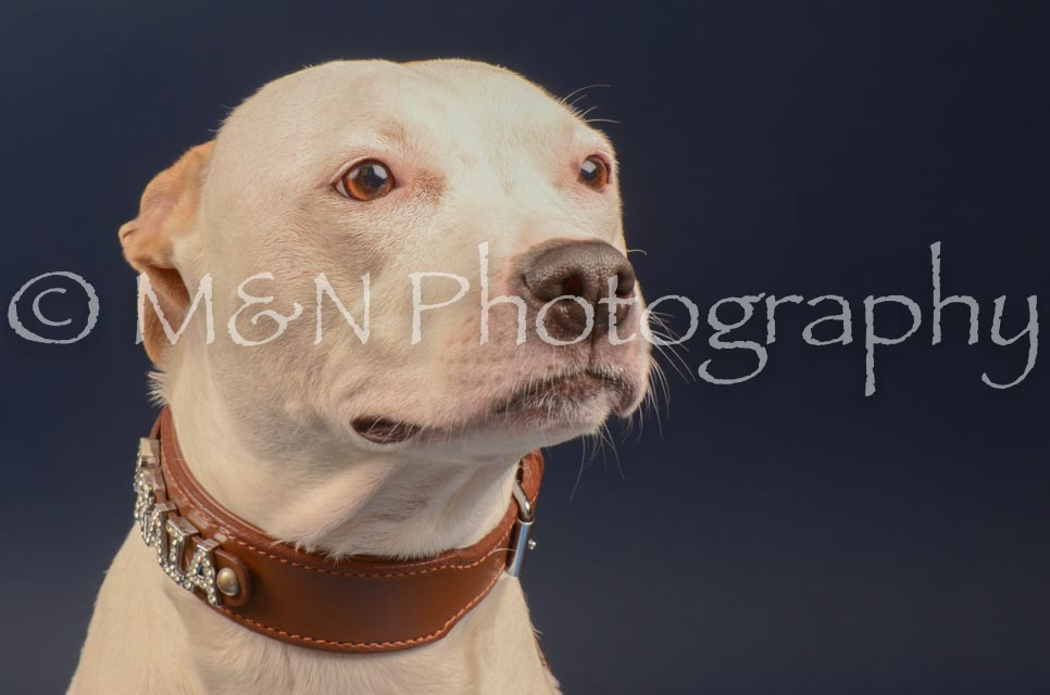 M&N Photography -DSC_4630