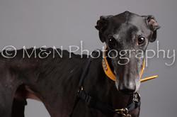 M&N Photography -DSC_2930