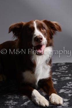 M&N Photography -DSC_1465
