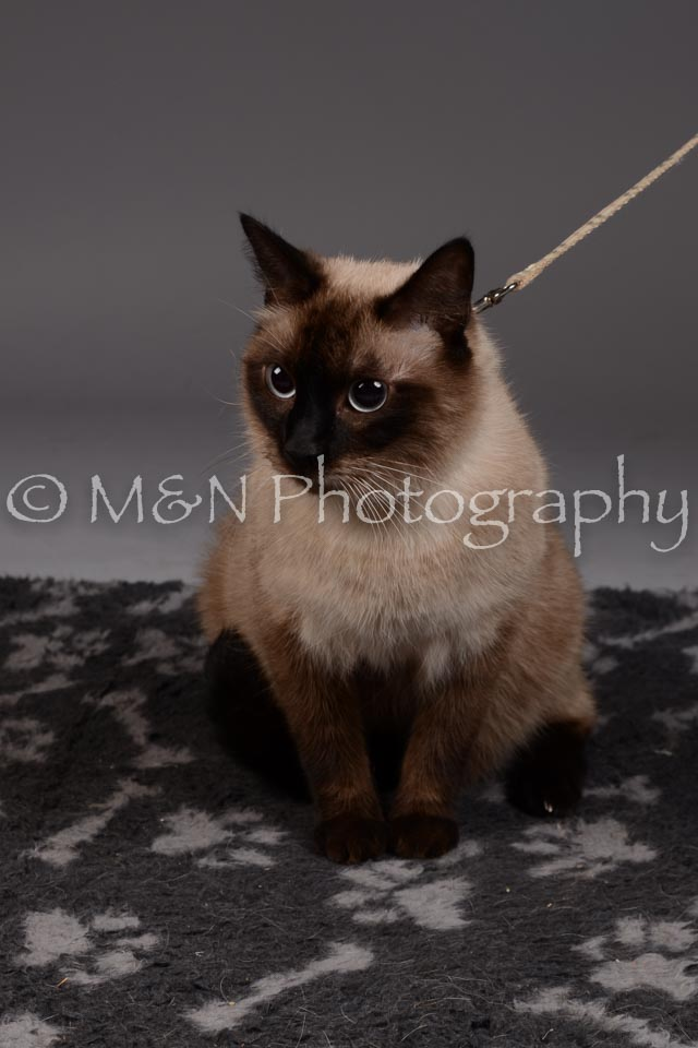 M&N Photography -DSC_2256