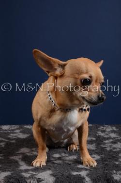 M&N Photography -DSC_3832