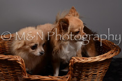 M&N Photography -DSC_1818