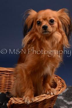M&N Photography -DSC_0272