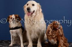 M&N Photography -DSC_5176