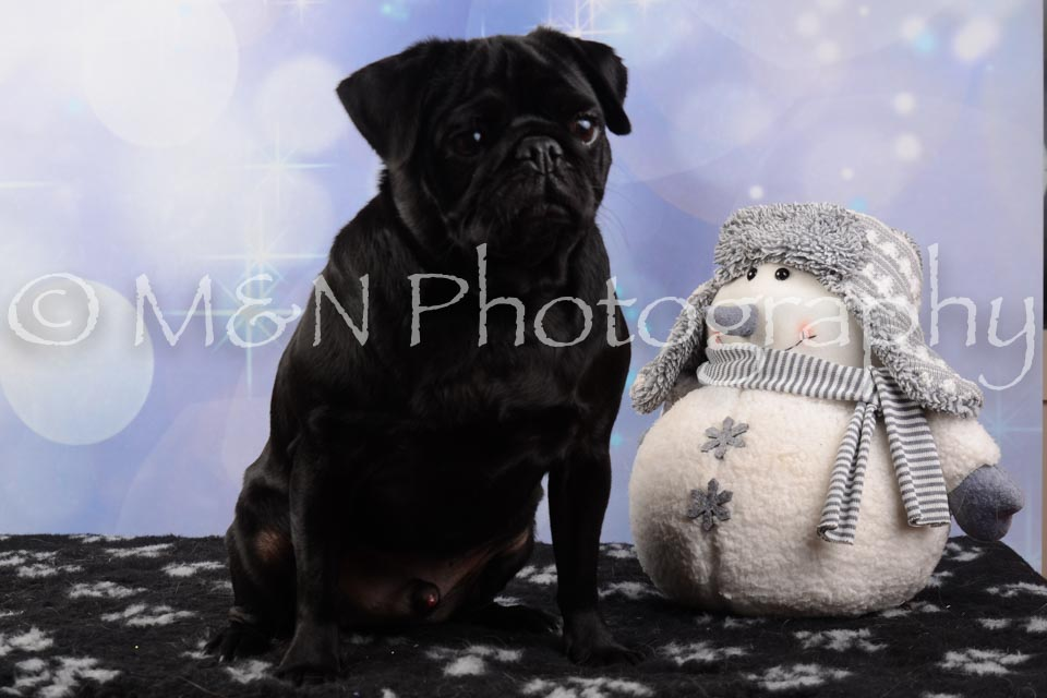 M&N Photography -DSC_6606