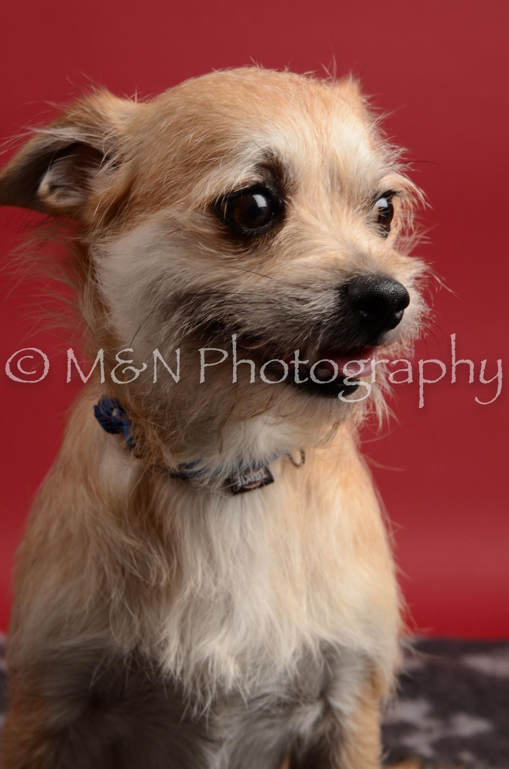 M&N Photography -DSC_8571