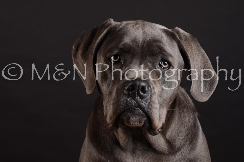 M&N Photography -DSC_5587