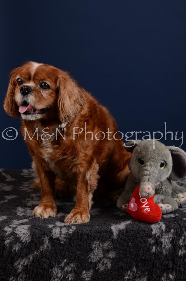 M&N Photography -DSC_4299