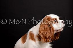 M&N Photography -DSC_5806