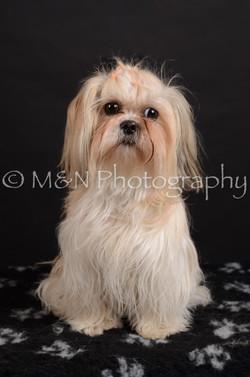 M&N Photography -DSC_5722
