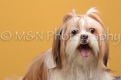 M&N Photography -DSC_4543