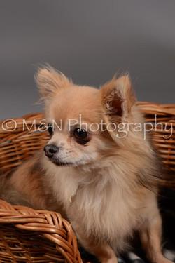 M&N Photography -DSC_1828
