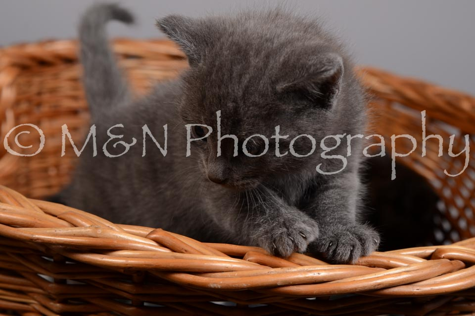 M&N Photography -DSC_2380