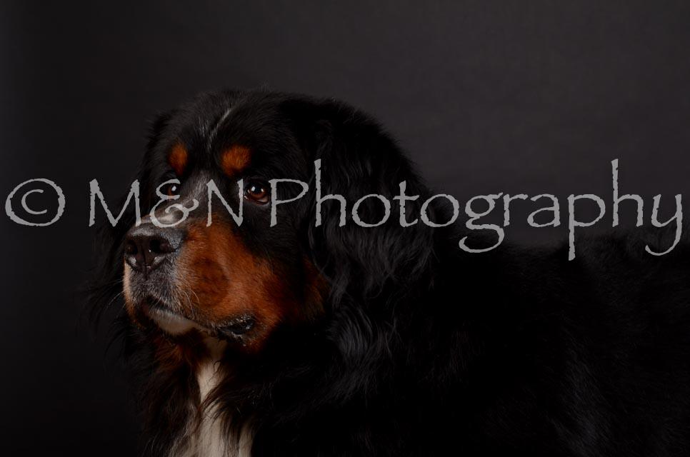 M&N Photography -DSC_5713