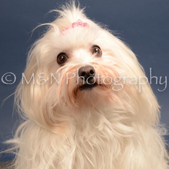 M&N Photography -DSC_4128