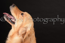 M&N Photography -DSC_9904