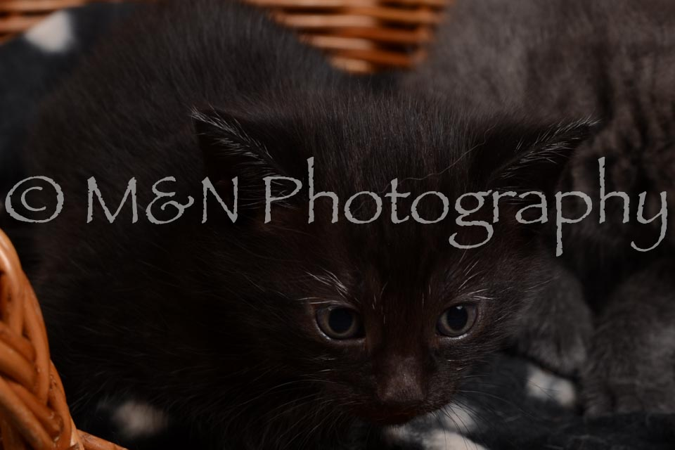 M&N Photography -DSC_2365