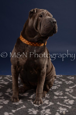 M&N Photography -DSC_0279
