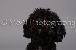 M&N Photography -DSC_2640