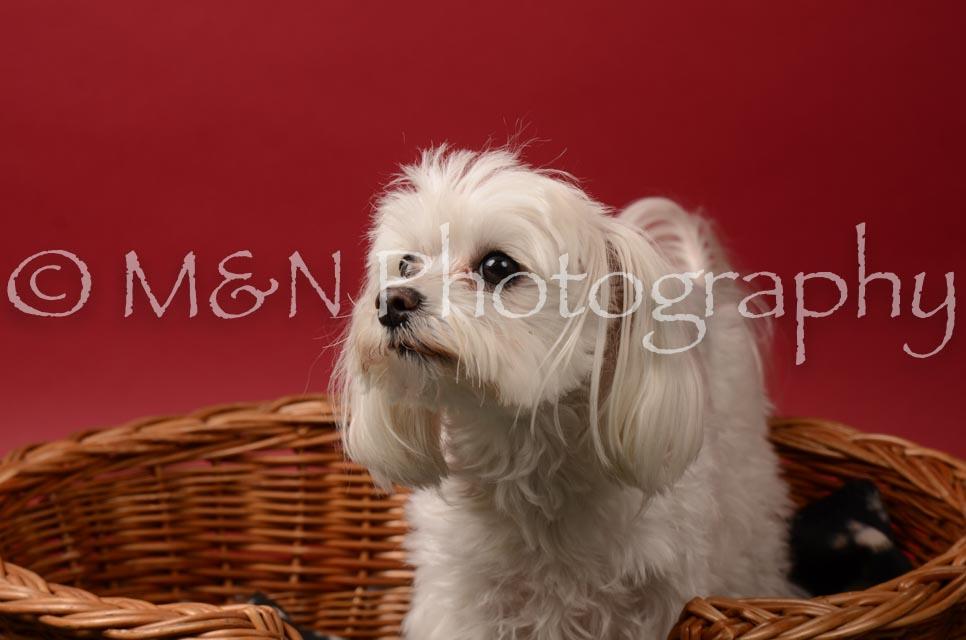 M&N Photography -DSC_6823